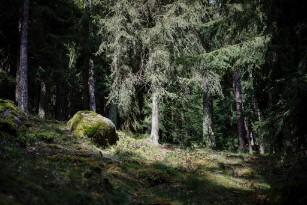 Pădurile private de 30 ha, întreţinute cu bani publici