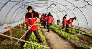 Cursuri pentru lucrator in cultura plantelor_01