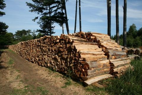 Furt de lemn din pădure la Podenii Noi