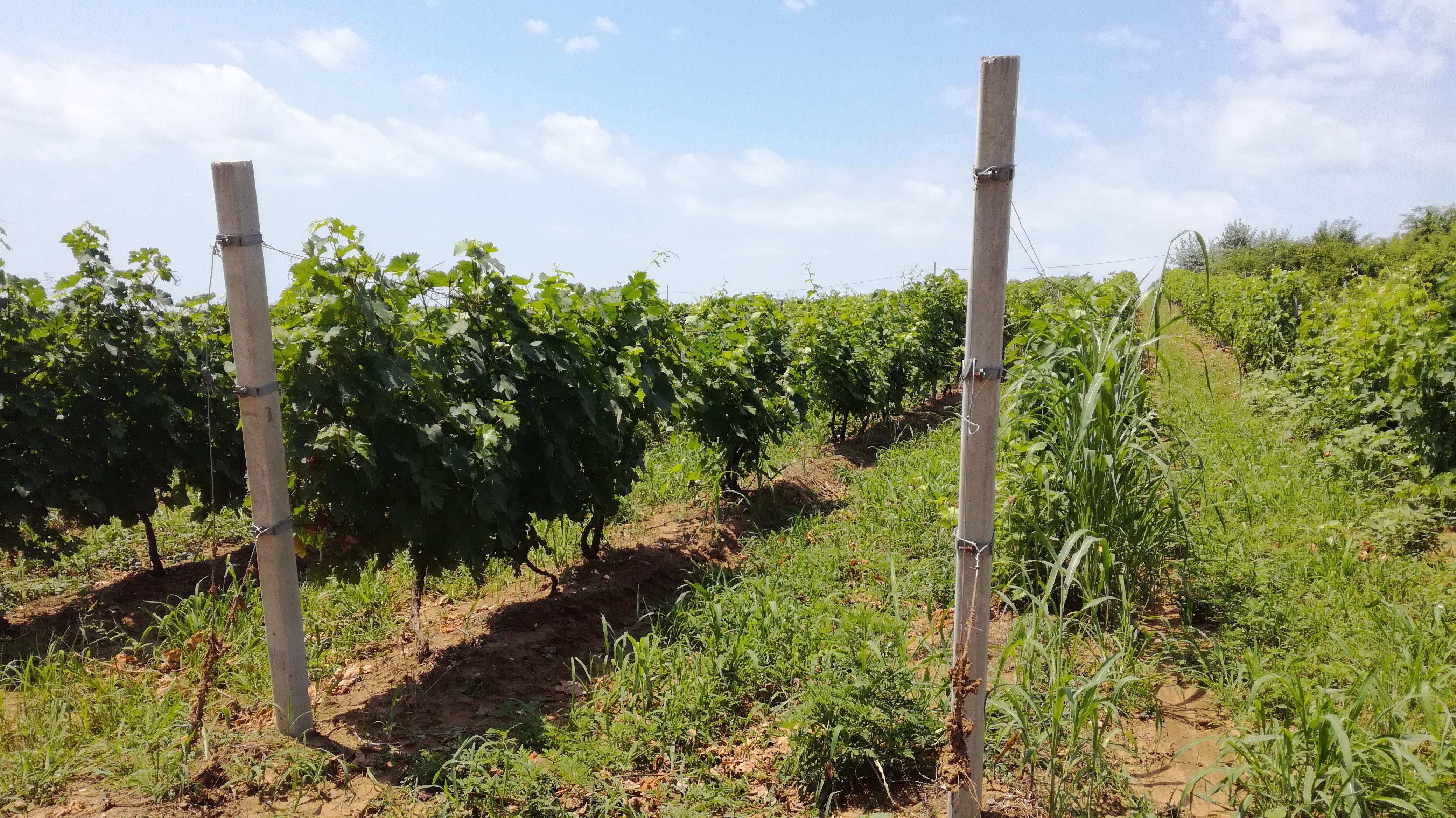 Cererile pentru ajutor de stat în domeniul viniviticol se depun la APIA până pe 14 decembrie