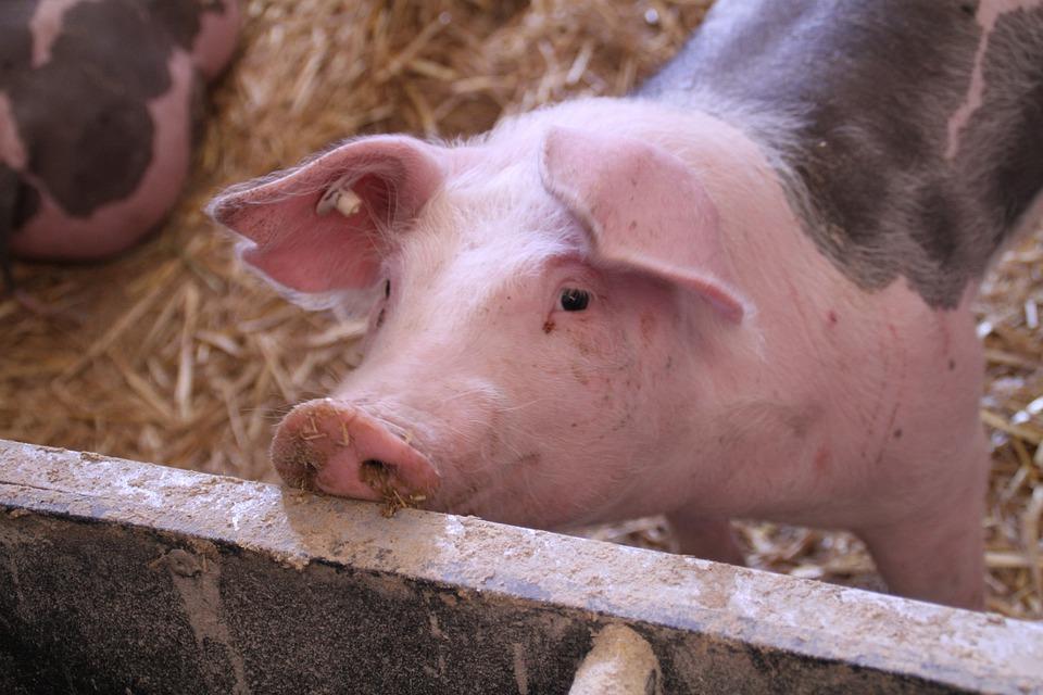 Când nu era vânător, trăgea cu arma în porcii din gospodărie