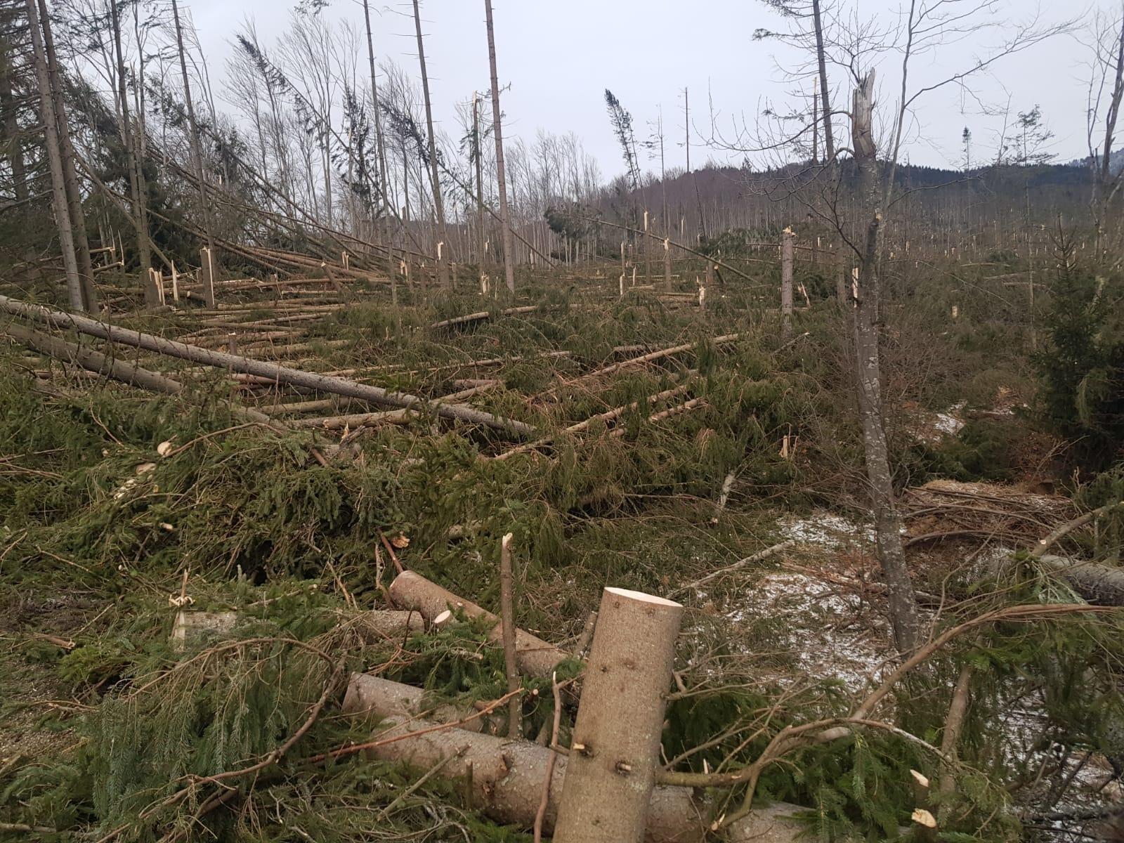 Prăpăd la Cheia. Vântul de peste 120 de km/h a doborât sute de copaci