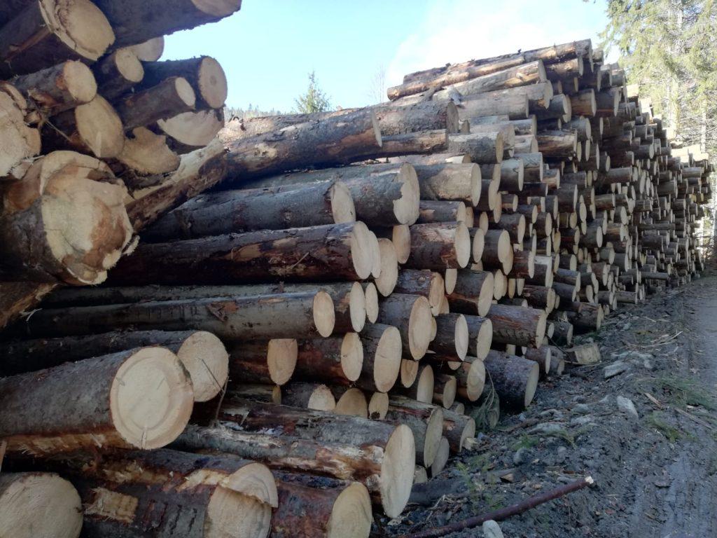 Un bărbat a murit într-o pădure din Lapoş. A căzut un copac peste el!
